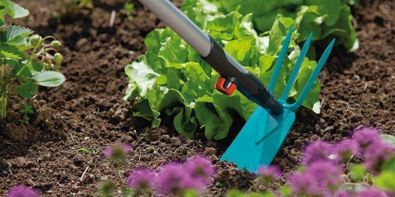 Правильный уход и посадка растений в вашем саду